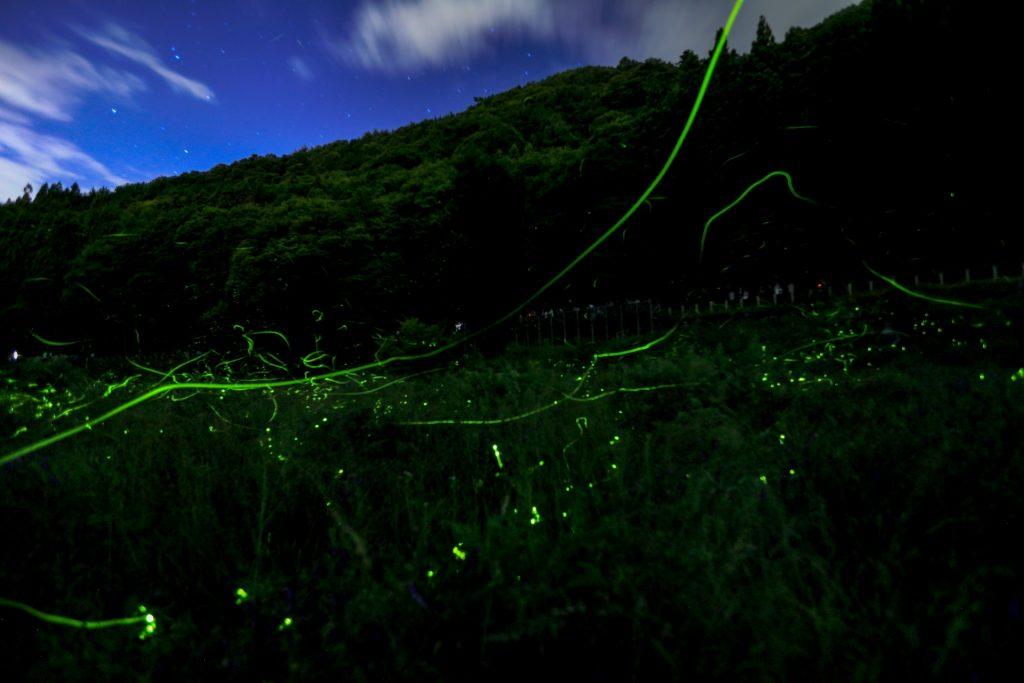 Tatsuno-Hotaru-festival-Japan-fireflies-dance