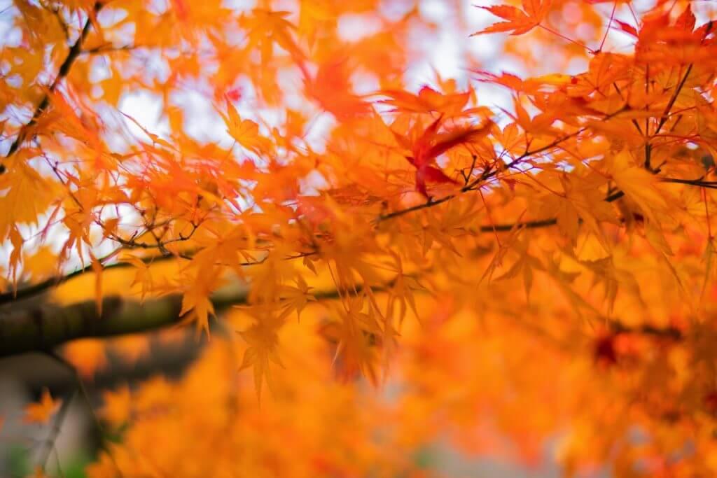 hakone-koyo-autumn