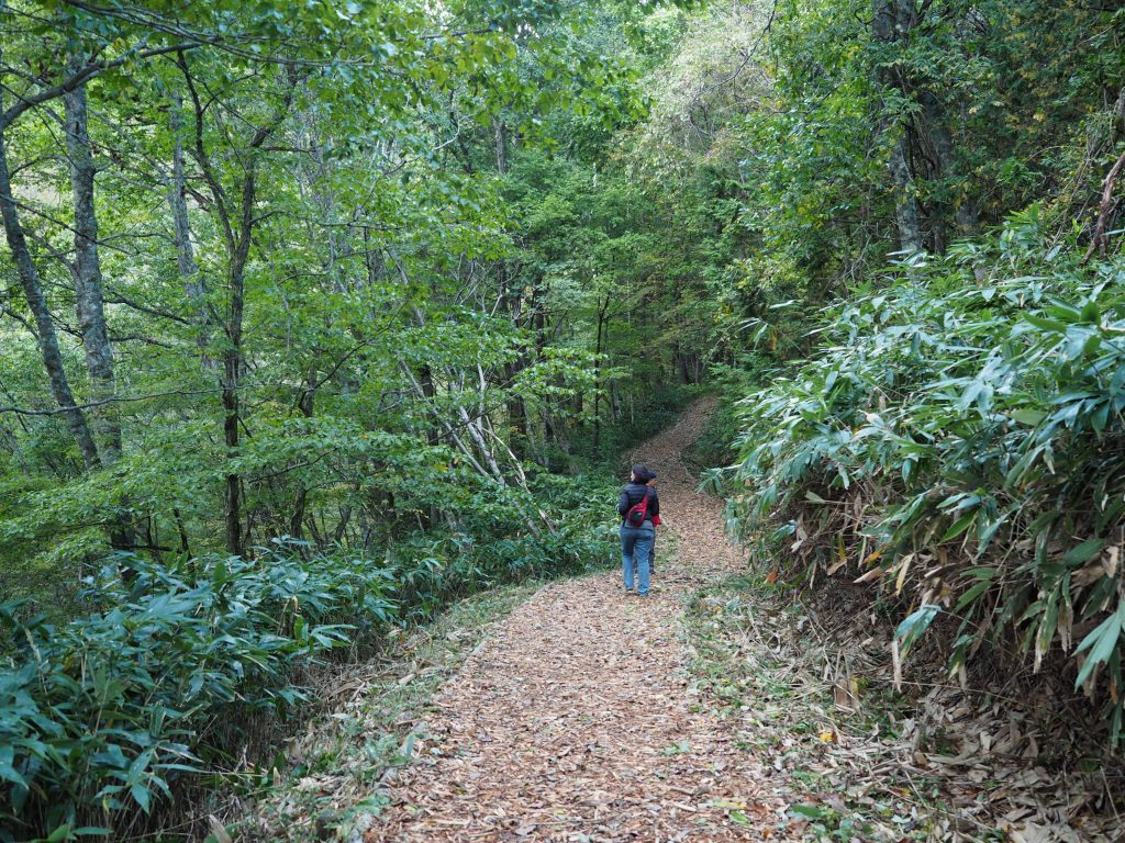 Aburagibirin-Forest-kiso-ontake