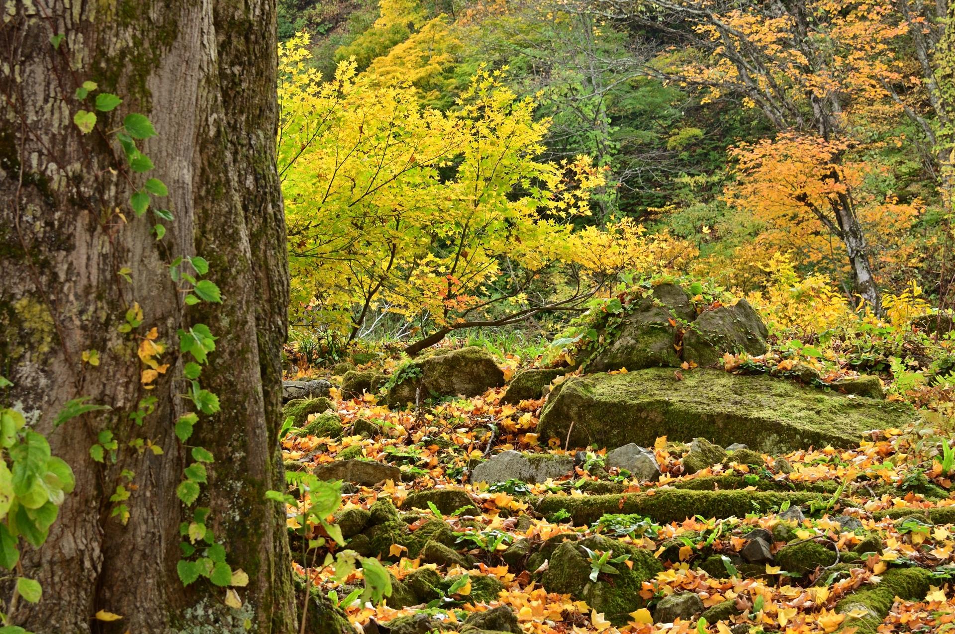 yuzawa-garden-alpine-garden