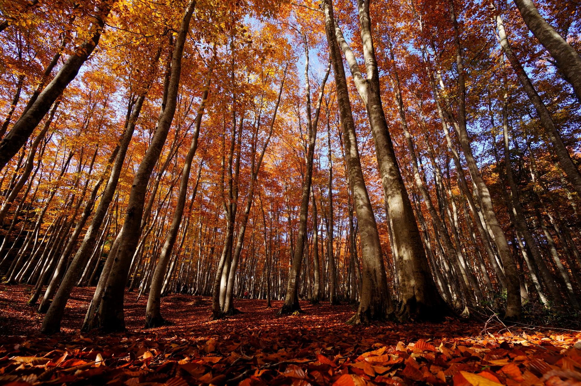 niigata-bijin-forest