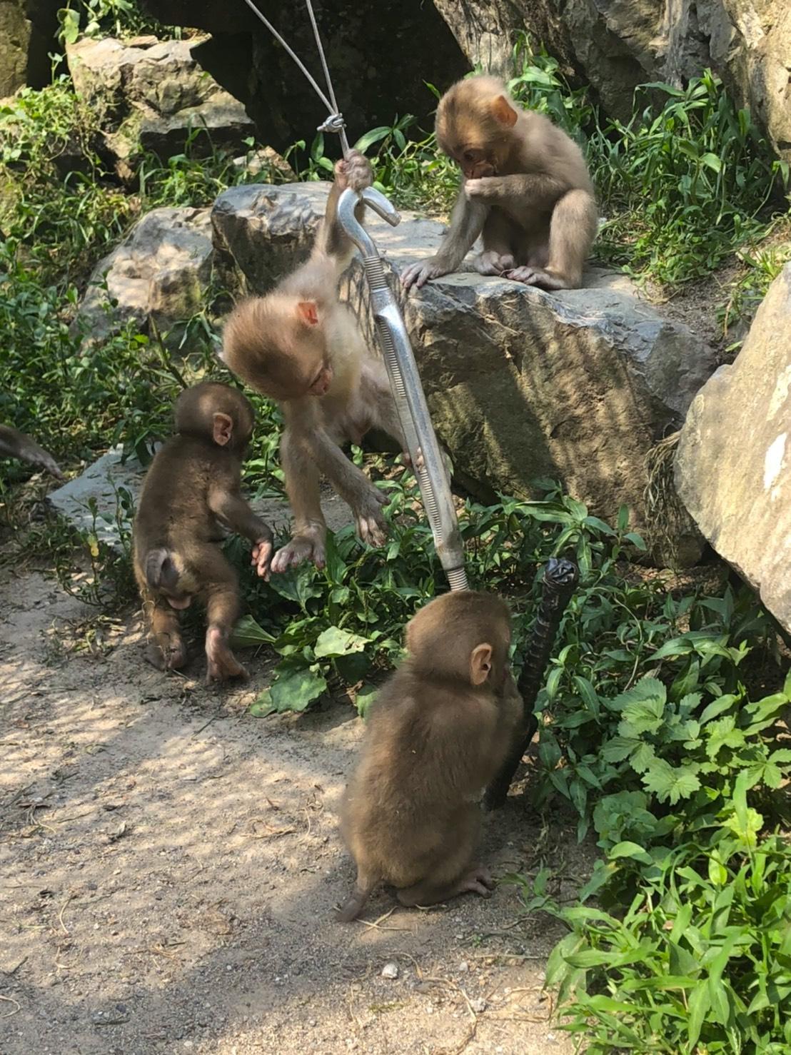 snow-monkey-park-august-2020