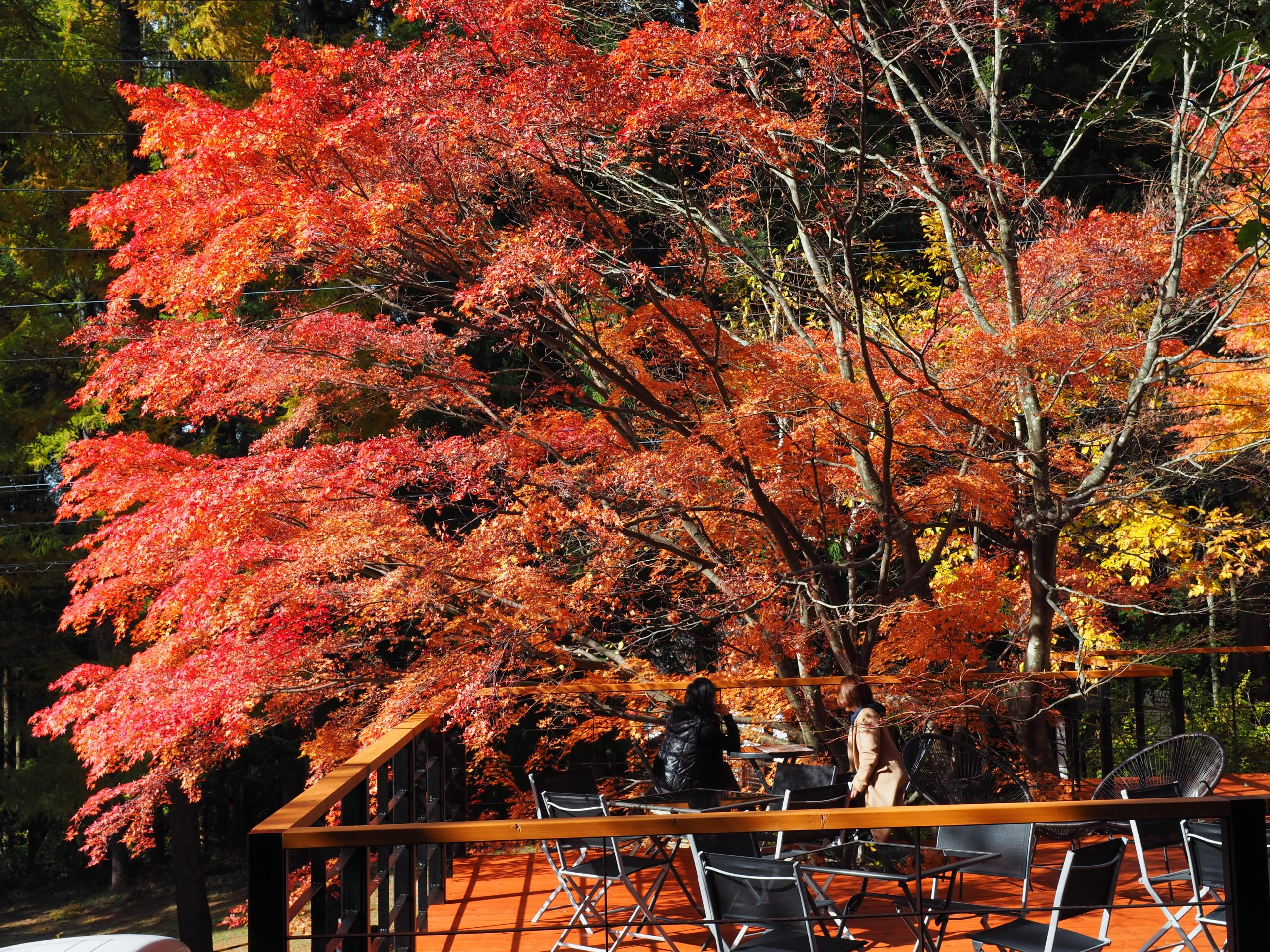 enza-cafe-autumn-leave