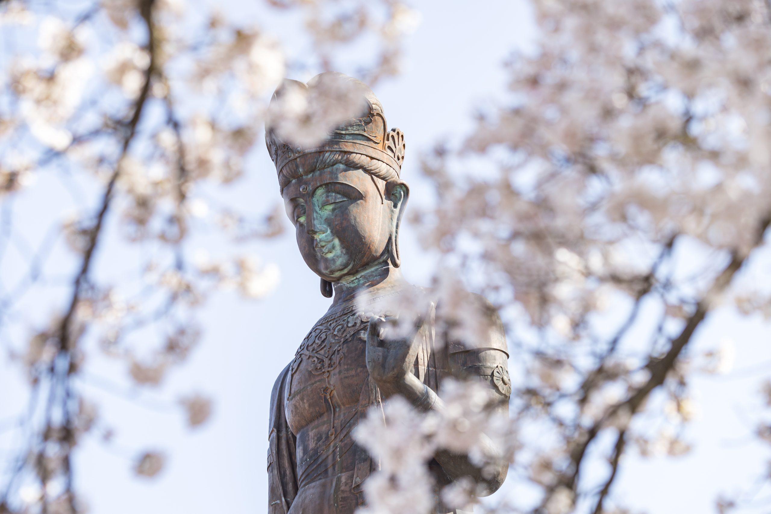 cherry-blossom-yudanaka-onsen-Sekai-Heiwa-Kannon-World-Peace-Buddha-Statu