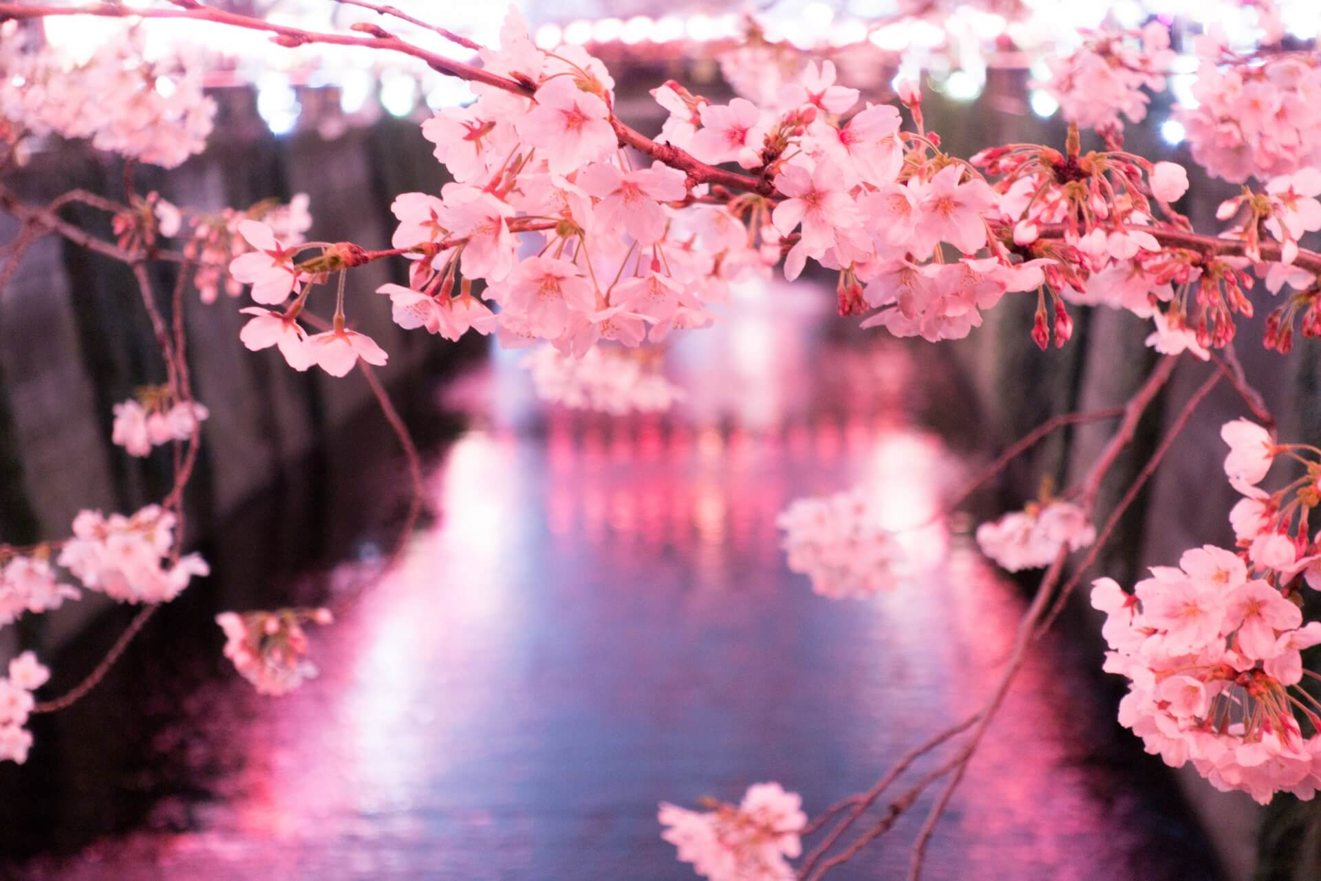 25 Best Places to See Cherry Blossoms In & Around Tokyo