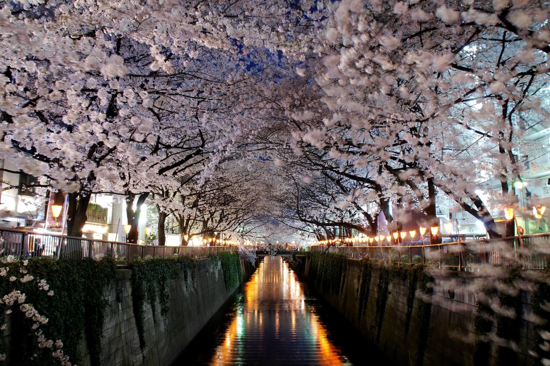 tokyo-meguro-river-blossoms