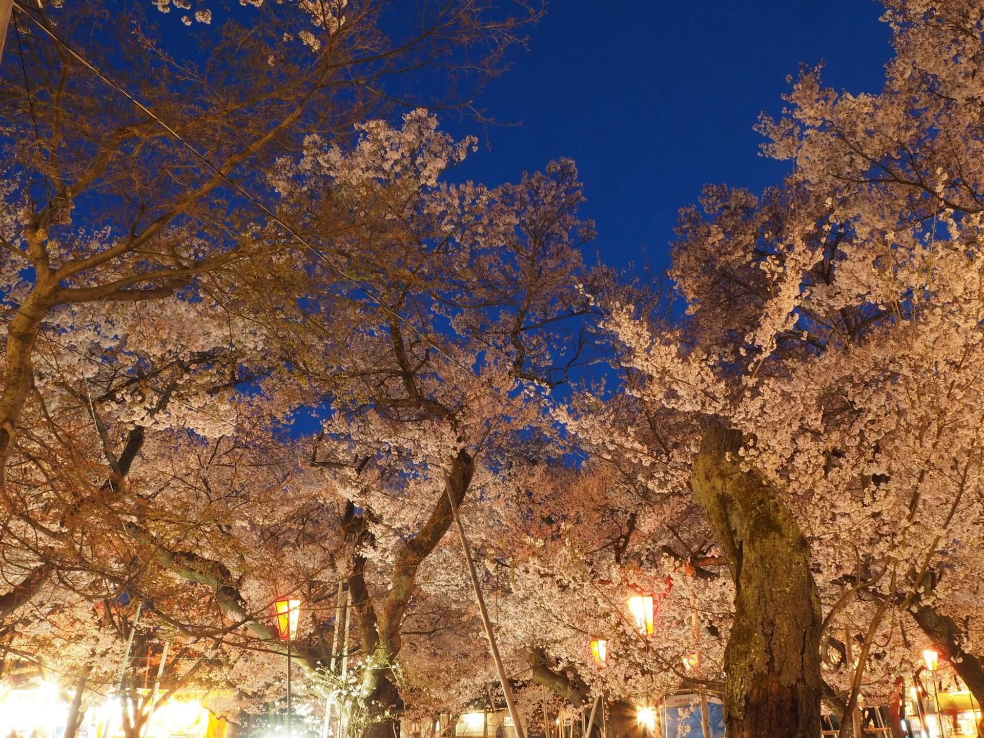 takato-castle-park-blossoms