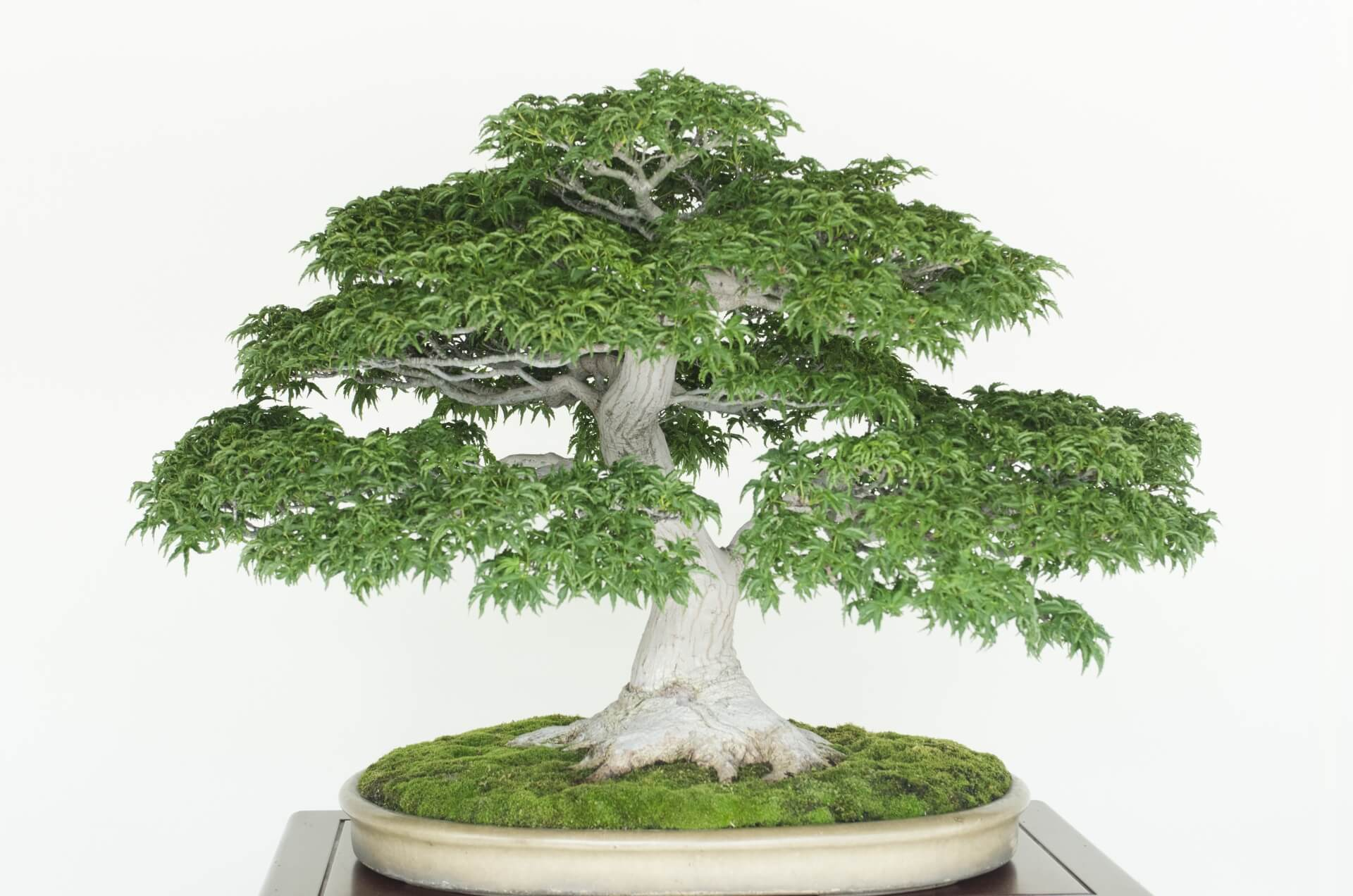 bonsai-art