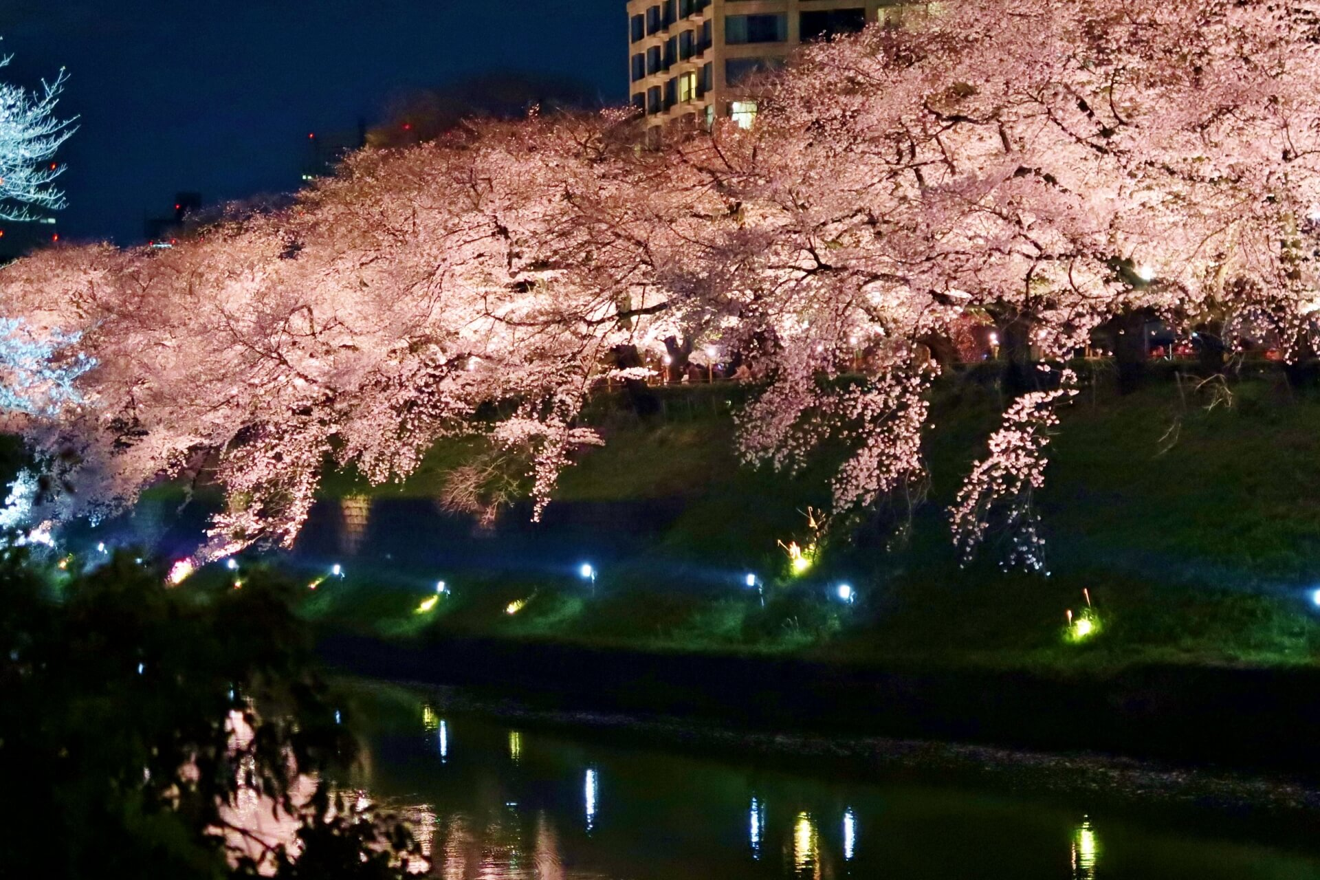 imperial-palace-tokyo-blossoms