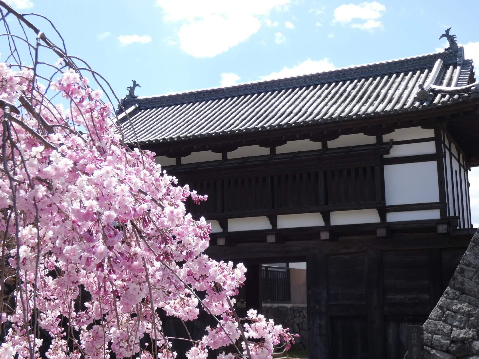 komoro-park-blossoms