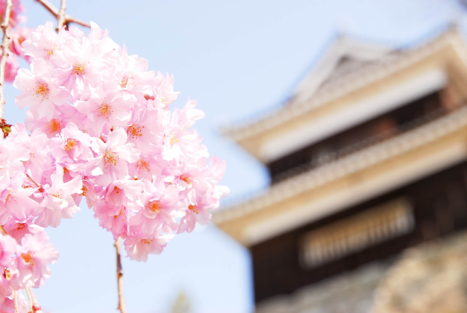 ueda-castle-blossoms