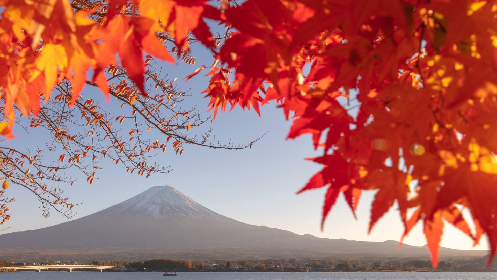 fuji-autumn