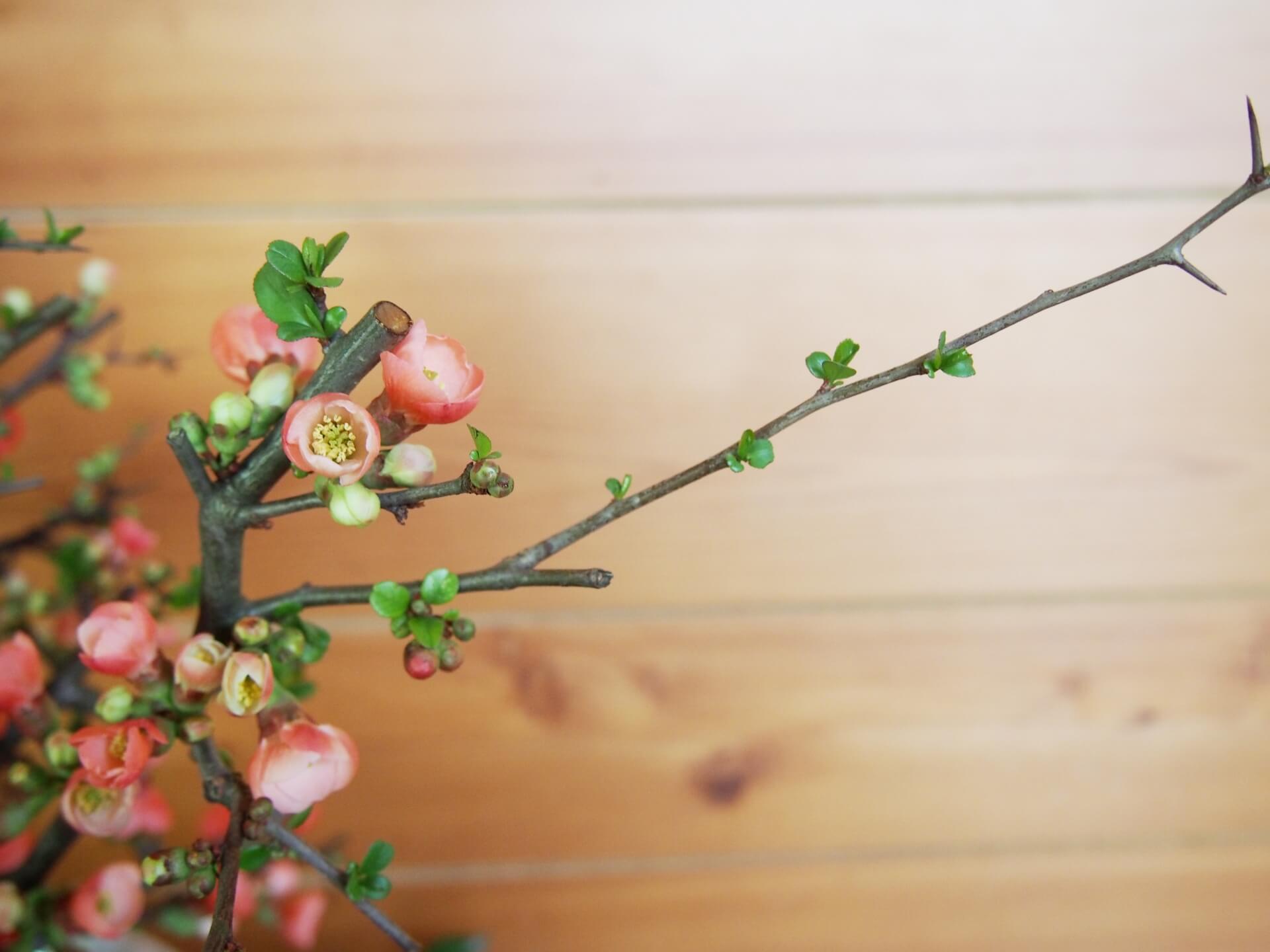 ikebanan-art
