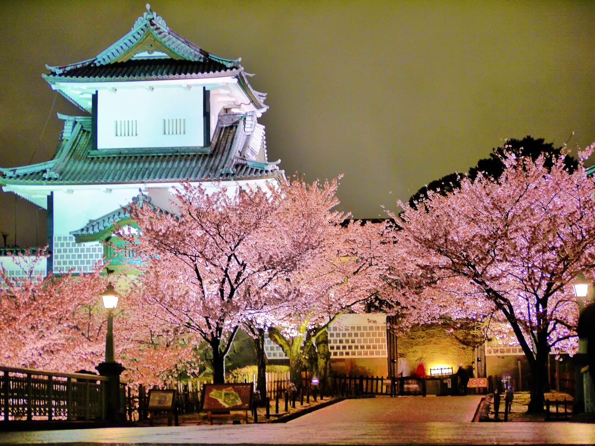 kanazawa-castle-blossoms