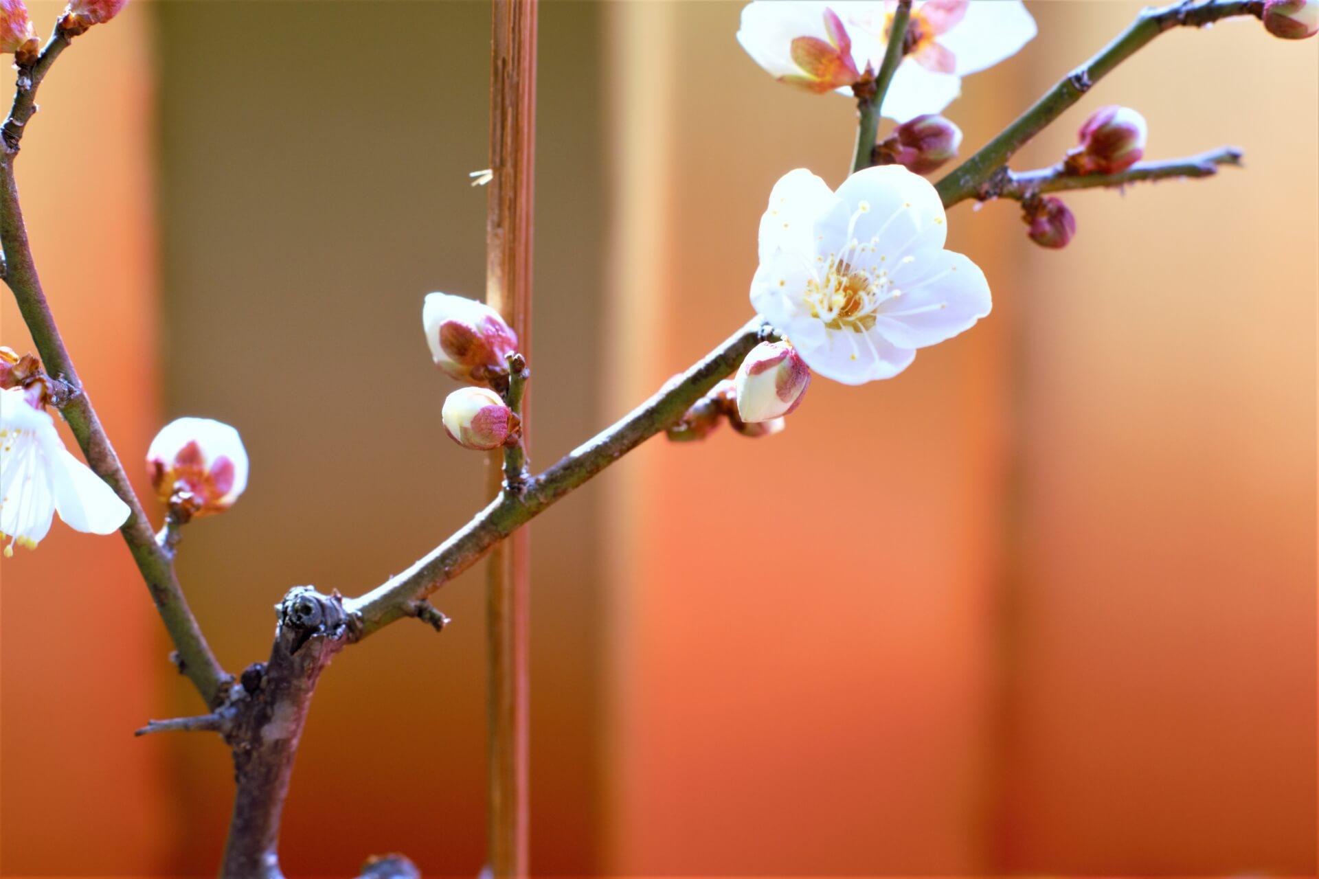 ikebana-art