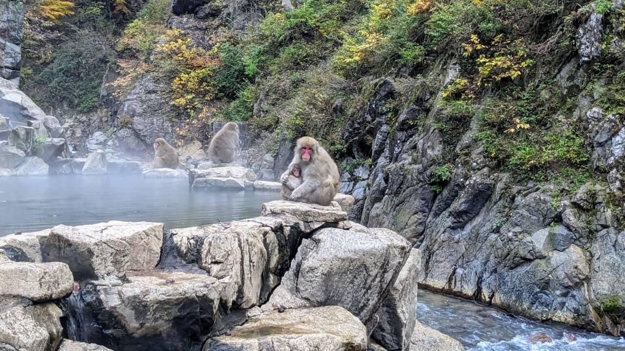 jigokudani-monkey-november-2020