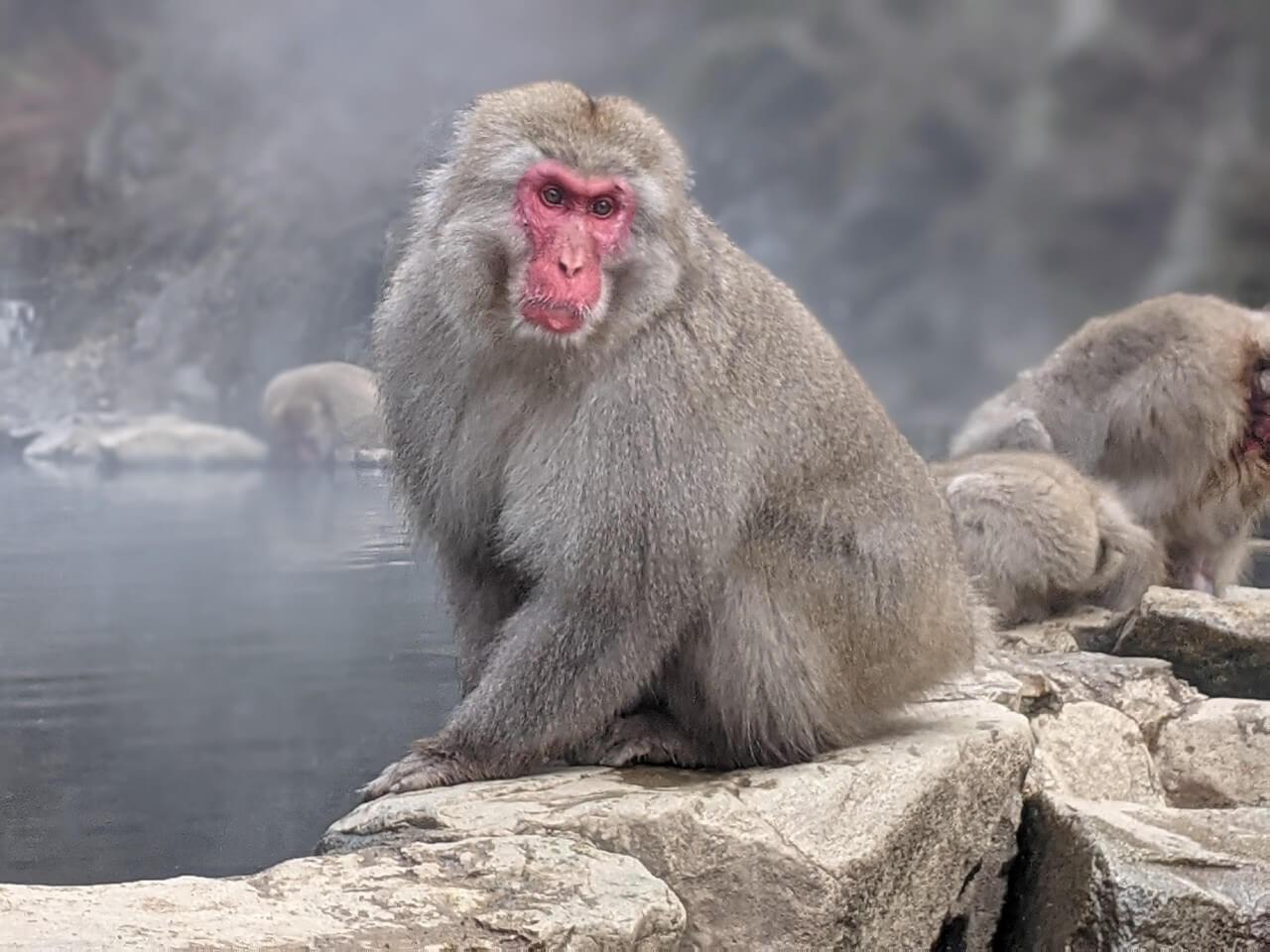 jigokudani-monkey-park-december-2020