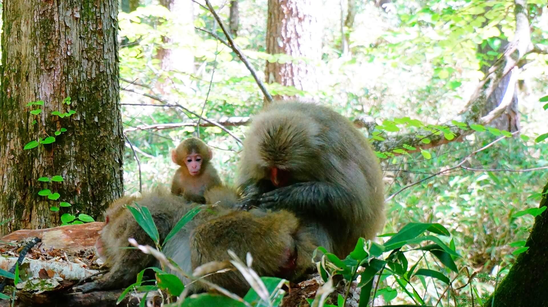 monkeys-wild