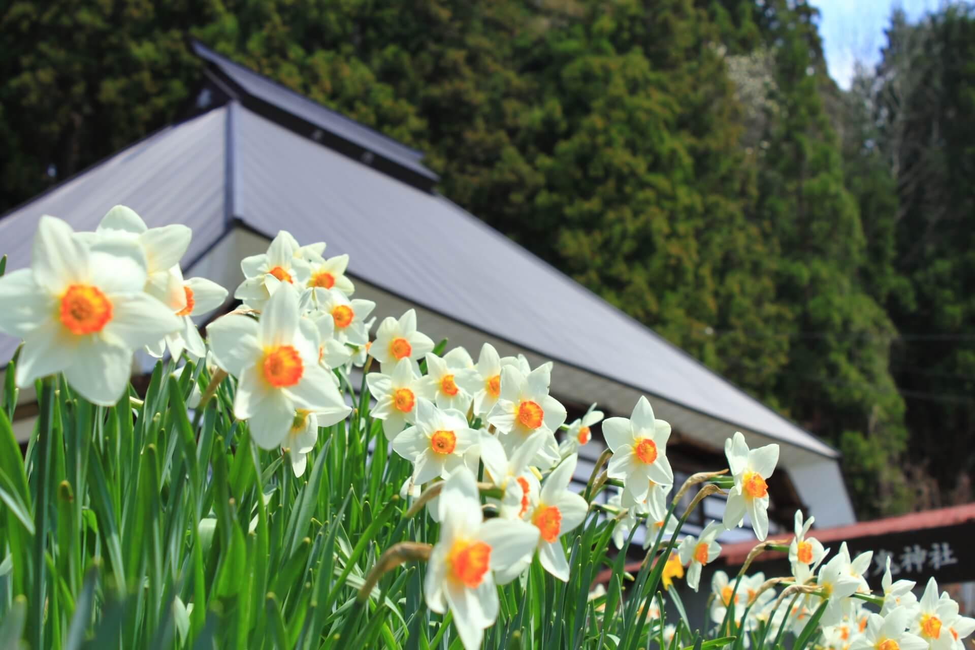 nagano-spring-landscape