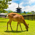 How to Get to Nara