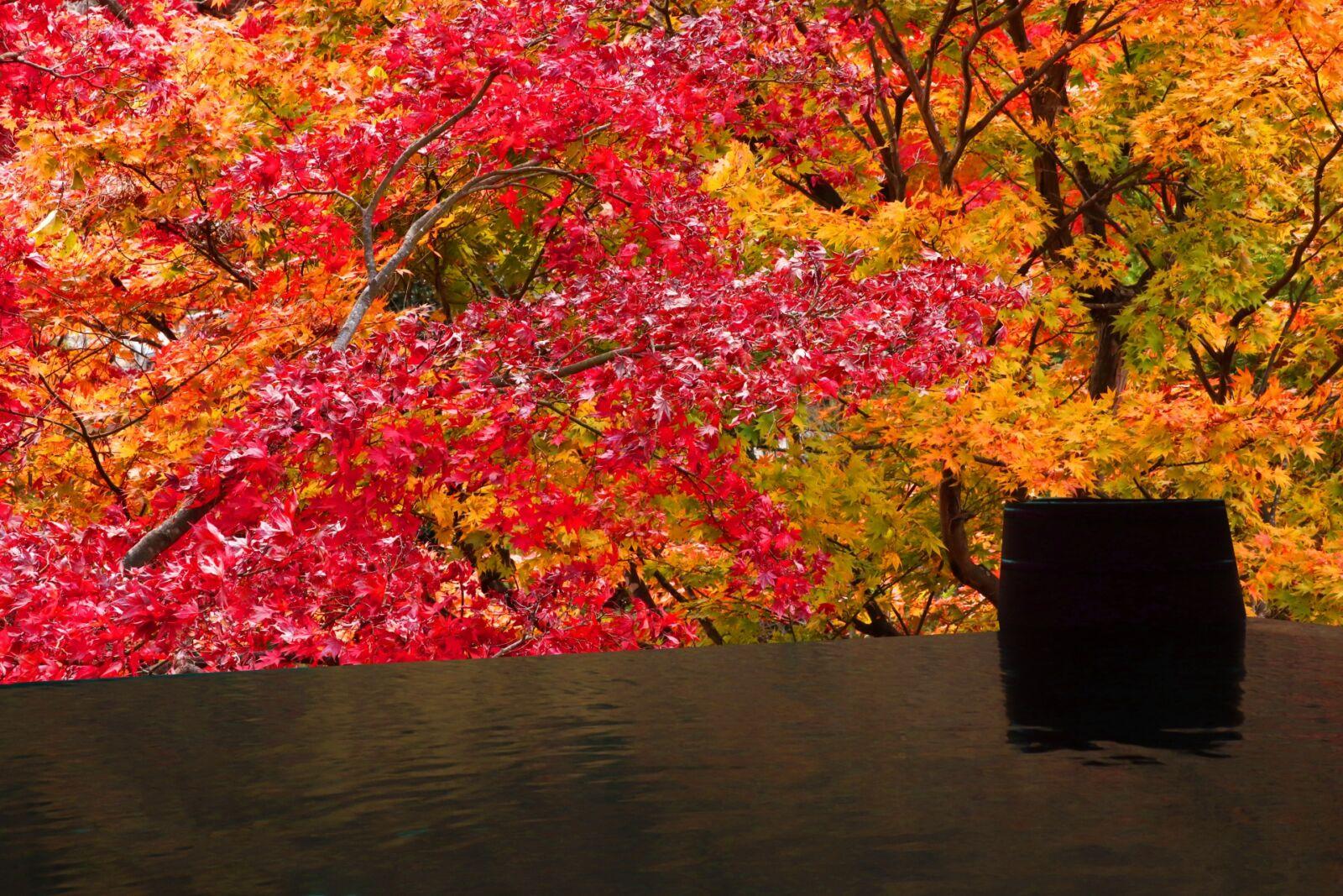 kyoto-ohara-sanzenin