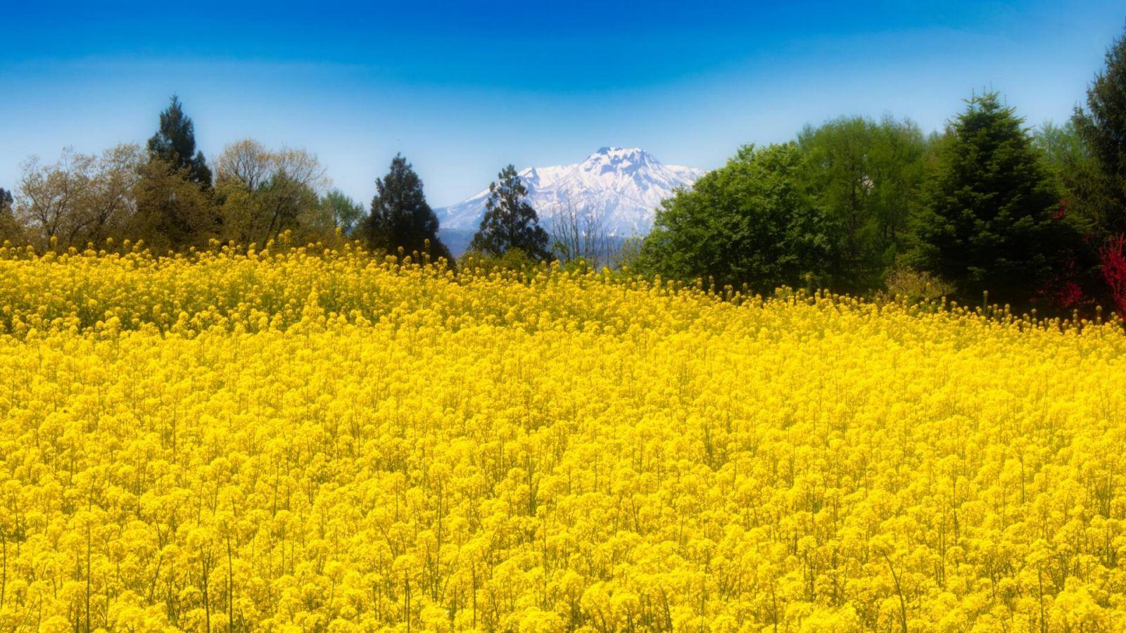 iiyama-green-season