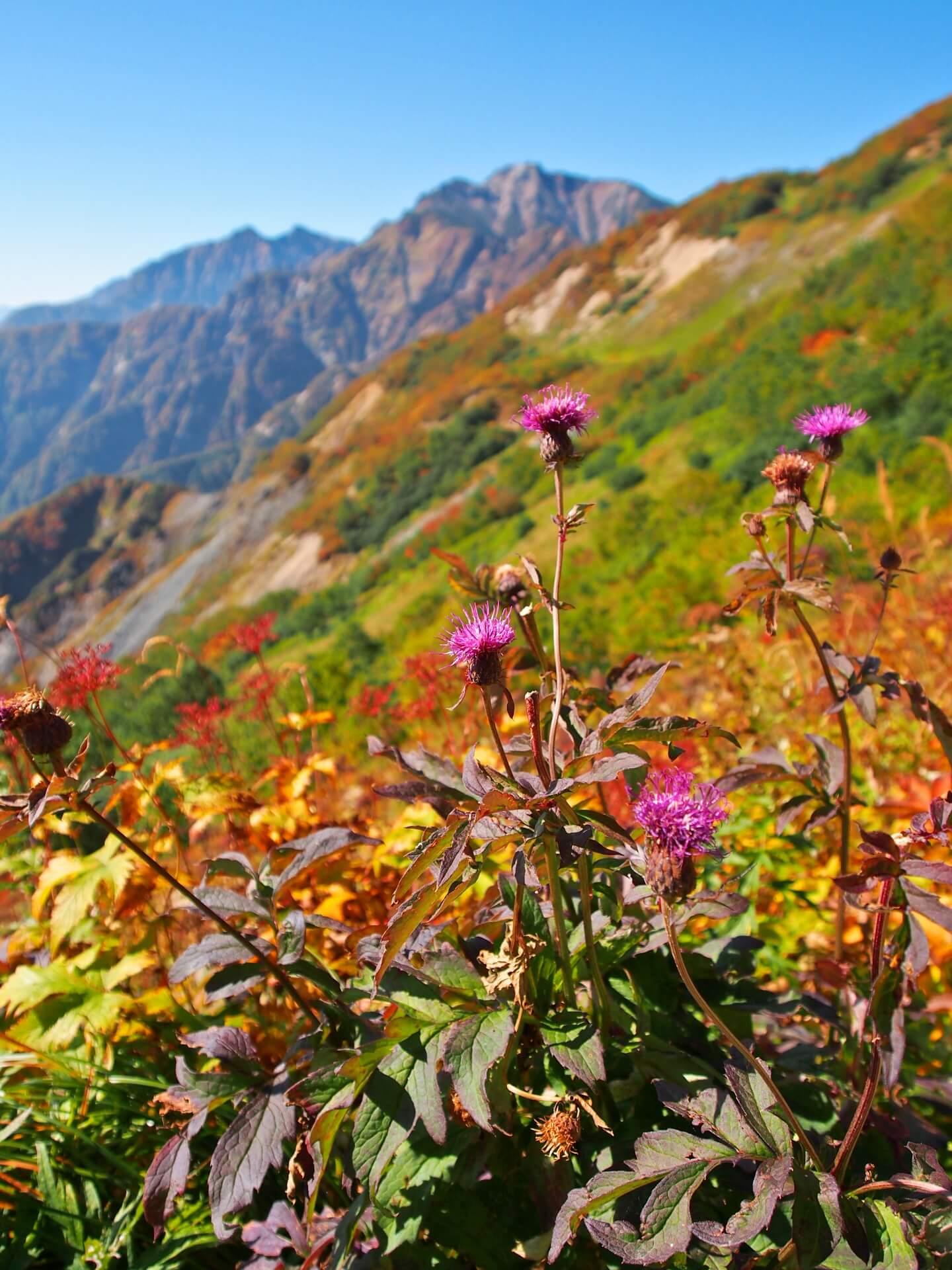 hakuba-autumn-flowers