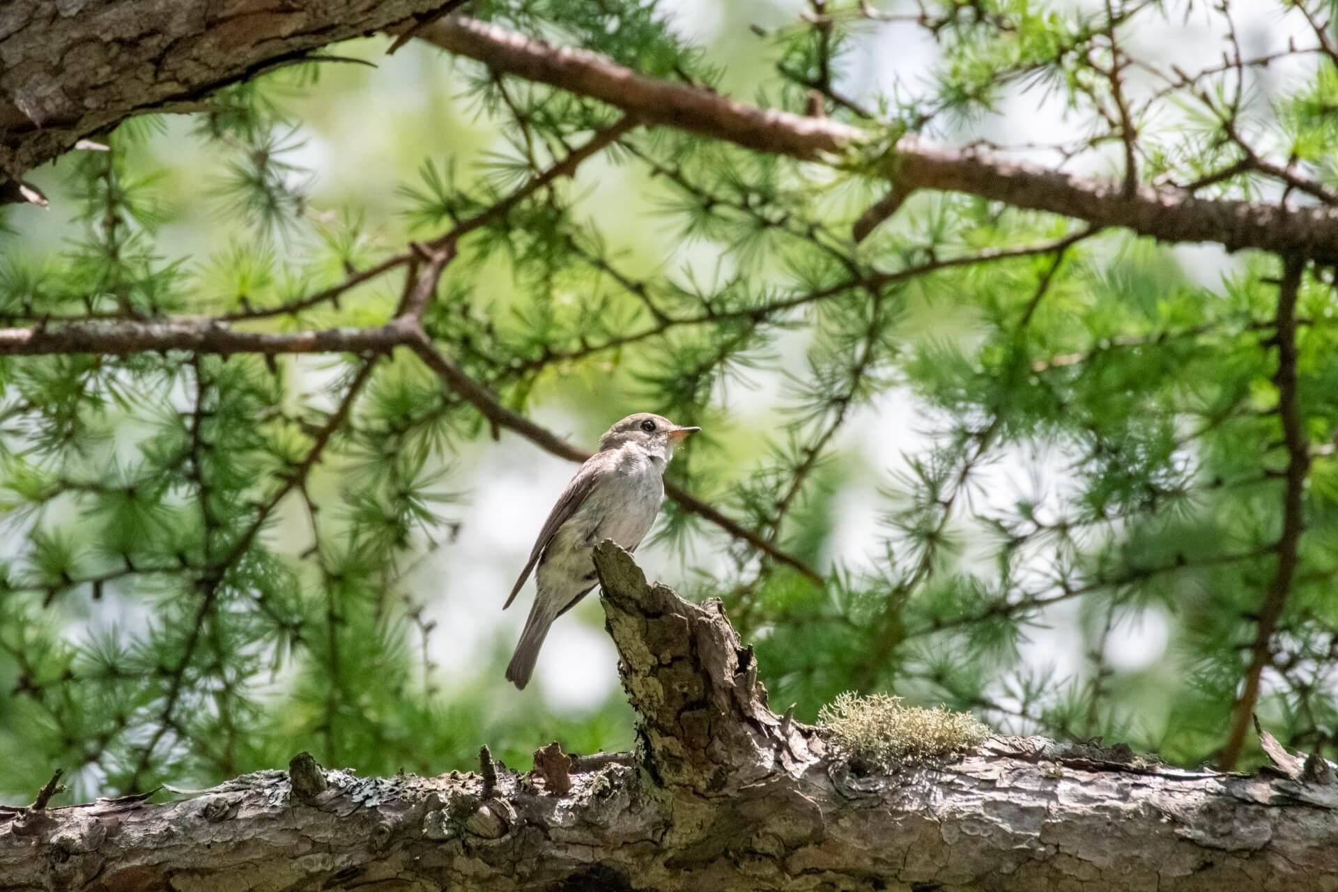 bird-chubu-sangaku-wildlife