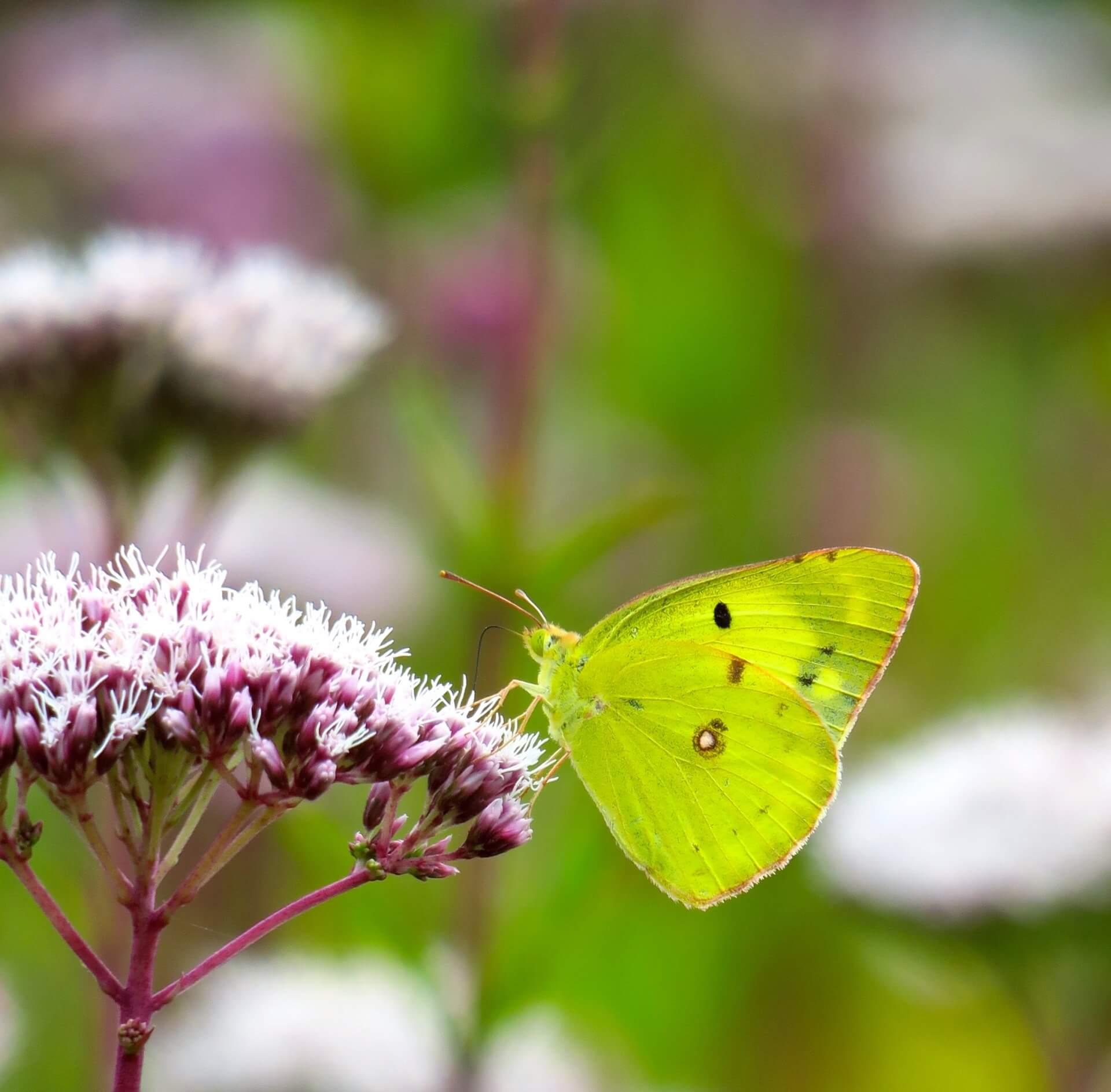 hakuba-flowers-wildlife