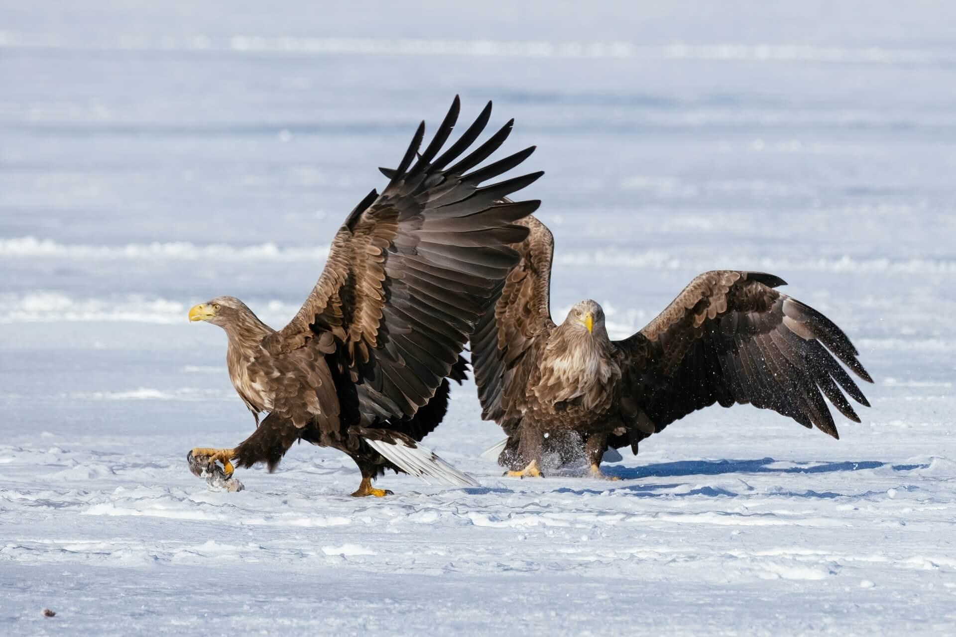 washi-eagle-wildlife