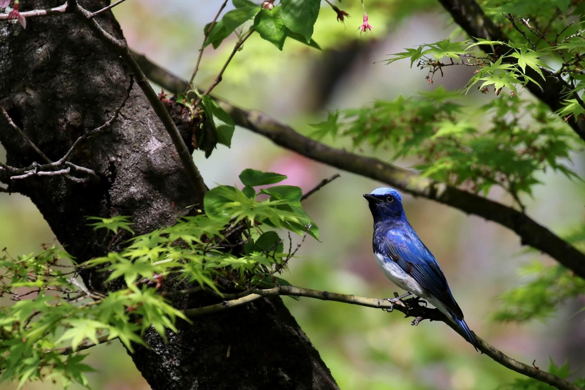 bird-wildlife