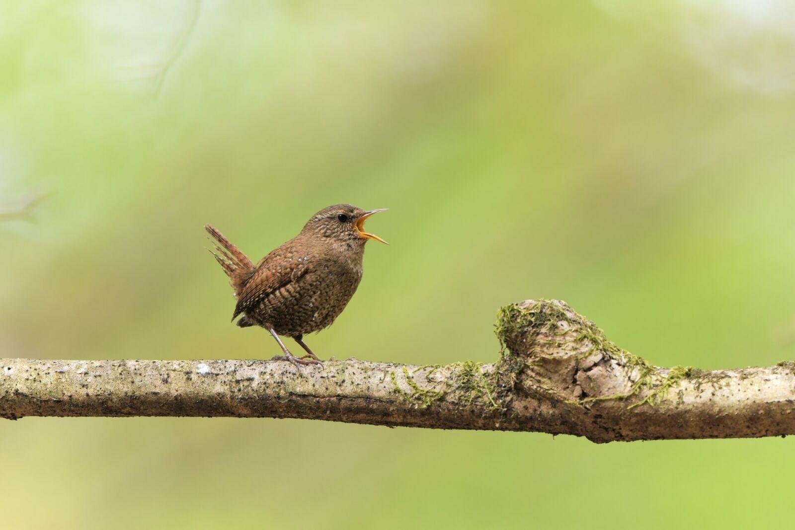 karuizawa-bird-wildlife