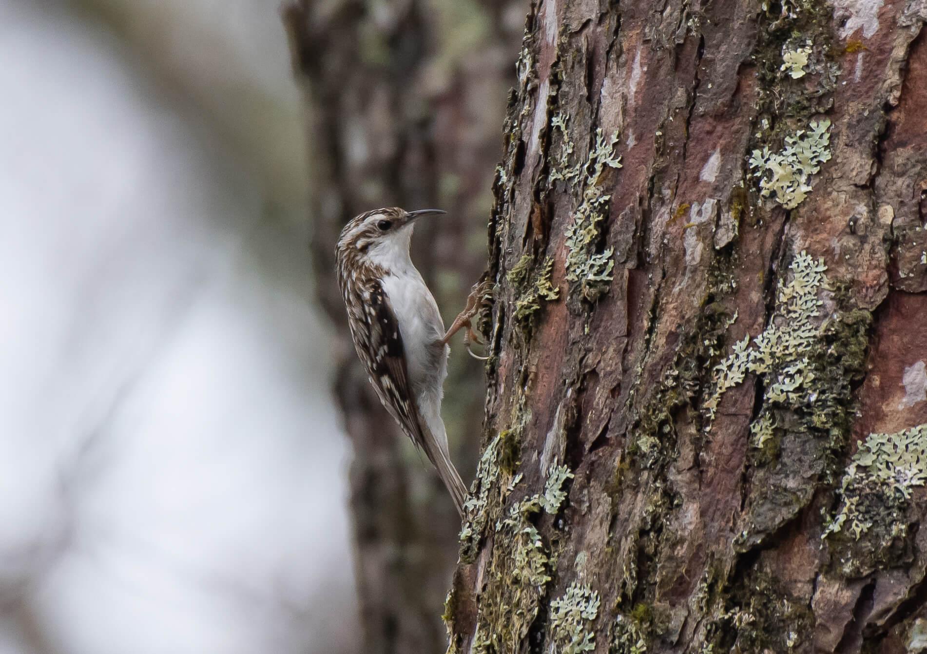 bird-wildlife-togakushi