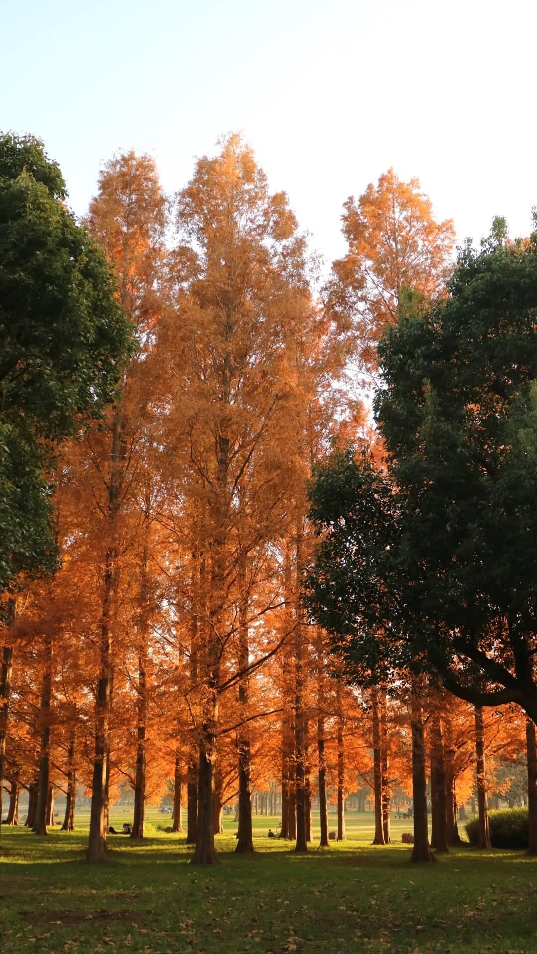 mizumoto-park-tokyo