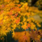 東京及周邊地區15個最佳觀賞紅葉的地方