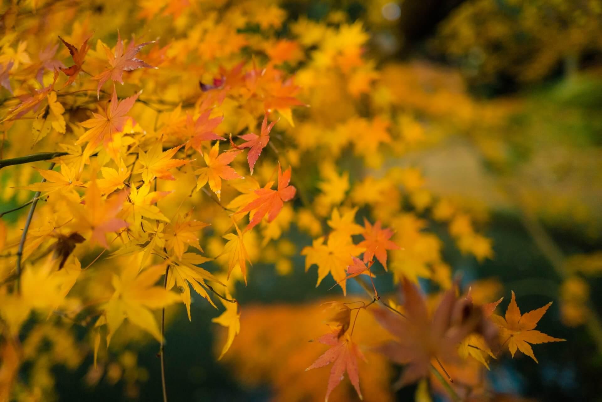 Best Autumn Leaves in Tokyo