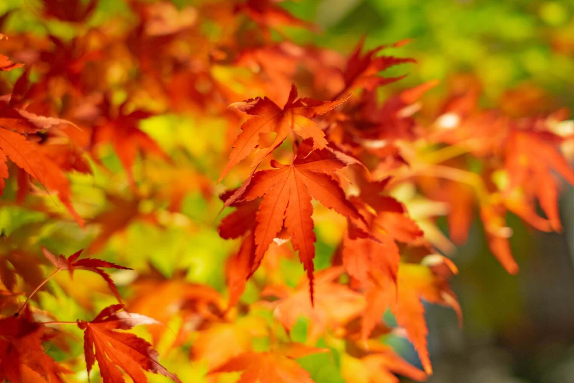 kyoto-autumn