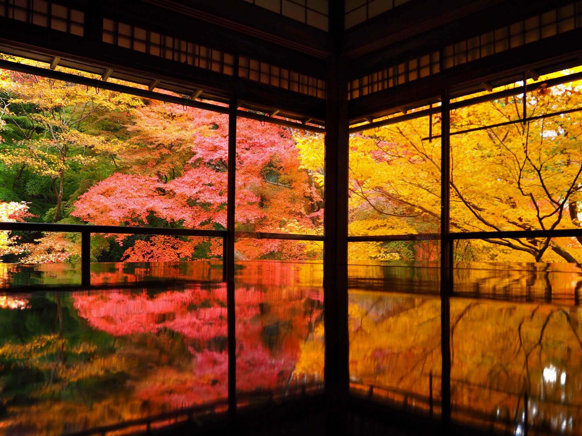 Best Autumn Leaves in Kyoto